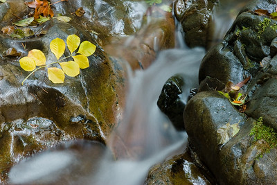 Falling Water, Samuel P. Taylor State Park
