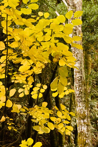 Fall in Devils Gulch, Samuel P. Taylor SP