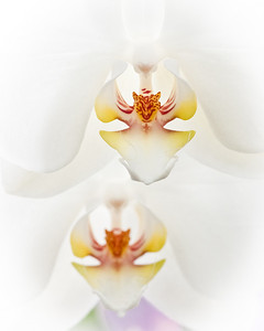 The_Sorcery_of_Orchids_2011