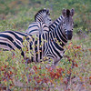 """Published in the Senalala Game Lodge website.   <a href=""""http://www.senalala.co.za"""">http://www.senalala.co.za</a>"""