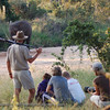 "Published in the Senalala Game Lodge website and the December 2009 Newsletter.   <a href=""http://www.senalala.co.za"">http://www.senalala.co.za</a>"