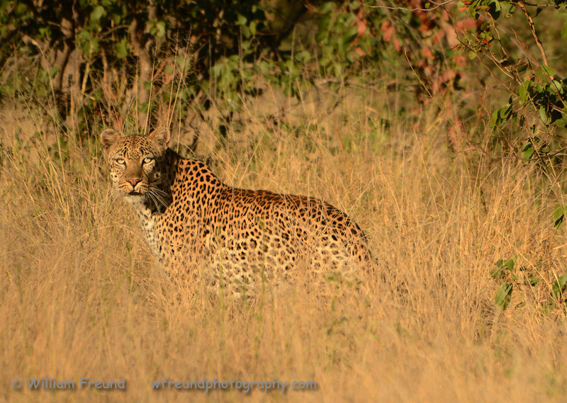 """Published in issue number 15, September 2013, of Talent Photo Magazine.<br />  <a href=""""http://www.talentphotomagazine.com"""">http://www.talentphotomagazine.com</a><br /> <br /> Taken at Senalala Game Lodge, South Africa.   <a href=""""http://www.senalala.co.za"""">http://www.senalala.co.za</a>"""