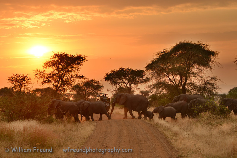 """Published in issue number 15, September 2013, of Talent Photo Magazine.<br />  <a href=""""http://www.talentphotomagazine.com"""">http://www.talentphotomagazine.com</a><br /> <br /> Taken in the Serengeti, Tanzania while on safari with Clearly Africa  <a href=""""http://www.clearlyafrica.com"""">http://www.clearlyafrica.com</a>"""