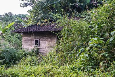 Overgrown abandoned house. Edib, Southwest Region, Cameroon Africa