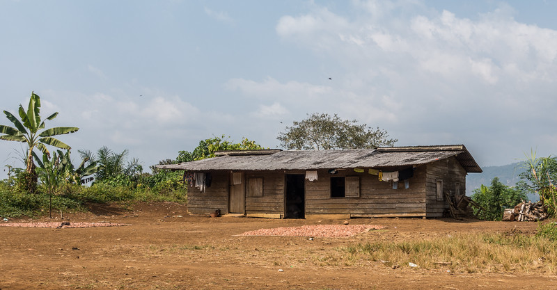 Typical house with drying cocoa beans, <i>Theobroma cacao</i> (Malvaceae). Bermin, Southwest Region, Cameroon Africa