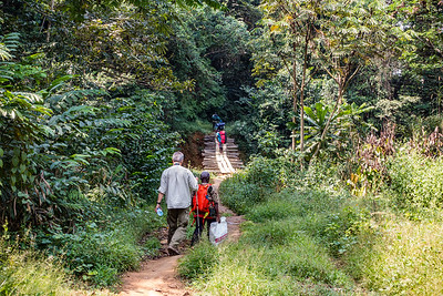Approaching streanm crossing on trail from Bangem to Bermin, Southwest Region, Cameroon Africa
