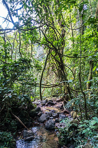 Hike from Edib to Baseng, Southwest Region, Cameroon Africa