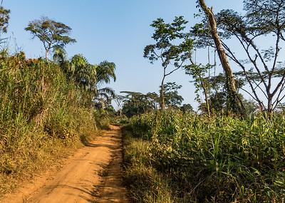 dirt road from Nyasoso to Bangem, Southwest Region, Cameroon Africa