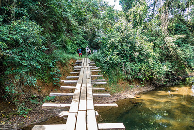 Log and plank bridge over stream on trail from Bangem to Bermin, Southwest Region, Cameroon Africa