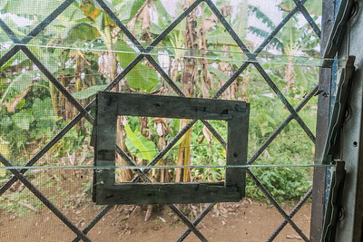 Screened window with a hole to let mosquitos in. Old WWF building. Nyasoso, Southwest Region, Cameroon Africa