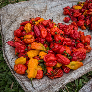 peppers, weekly market. Nyasoso, Southwest Region, Cameroon Africa