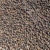 Drying cocoa beans, <i>Theobroma cacao</i> (Malvaceae). Nyasoso, Southwest Region, Cameroon Africa