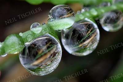#1380  Droplets on a blade of grass