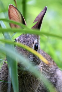 #1491  Bunny peek-a-boo
