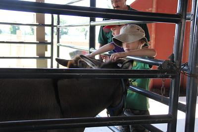Boone County 4-H Fair 2015