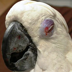 Other Nationwide Sanctuary Parrots found on the Web