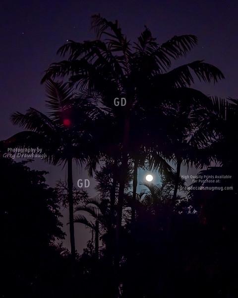 Moonrise Over Miami Springs