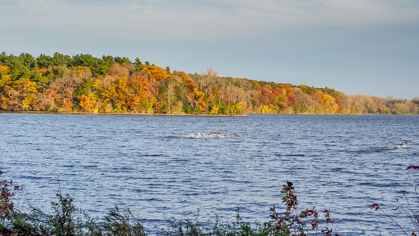 Vadnais Lake Fall Colors