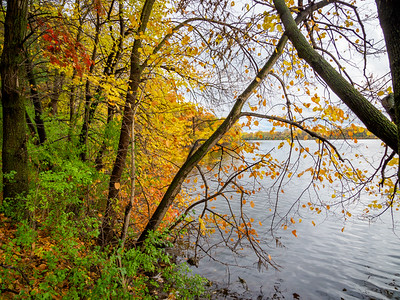 Fall at Vadnais Lake