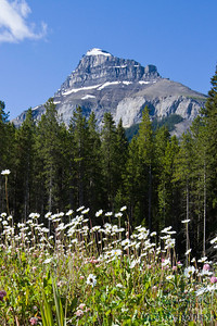 Castle Mountain with wildflowers