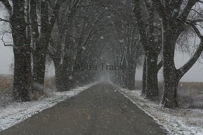 Weary Road Winter