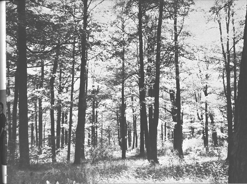 1960_elms_035
