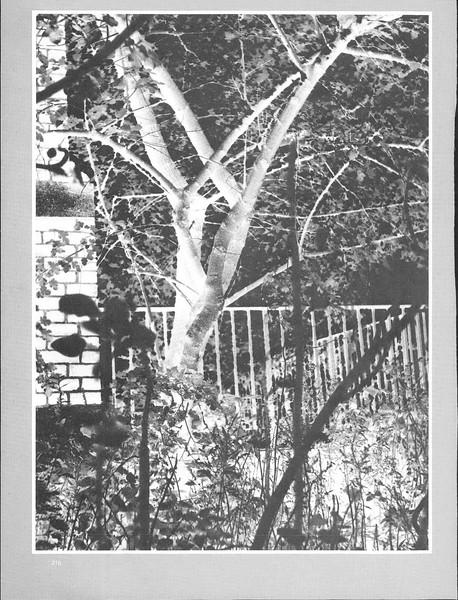 1976_elms_216