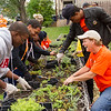 Bengals Dare to Care community service day at SUNY Buffalo State.