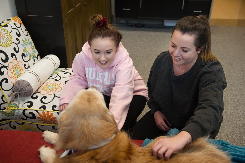Stella the therapy dog meeting with students during her office hours at SUNY Buffalo State College.