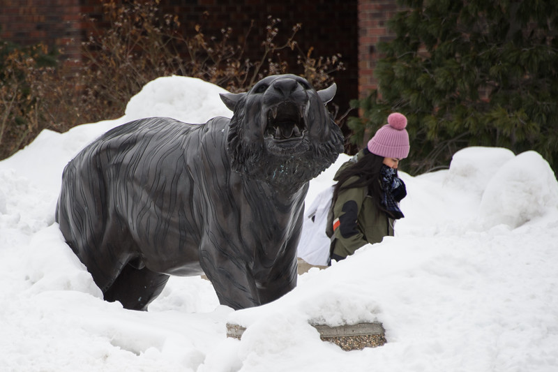 Bengal sculpture buried in snow at Buffalo State College.
