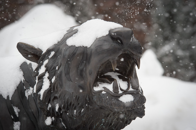 Bengal sculpture during winter snow storm at Buffalo State College.
