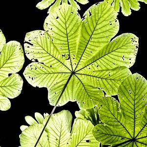 Green Metallic Leaves