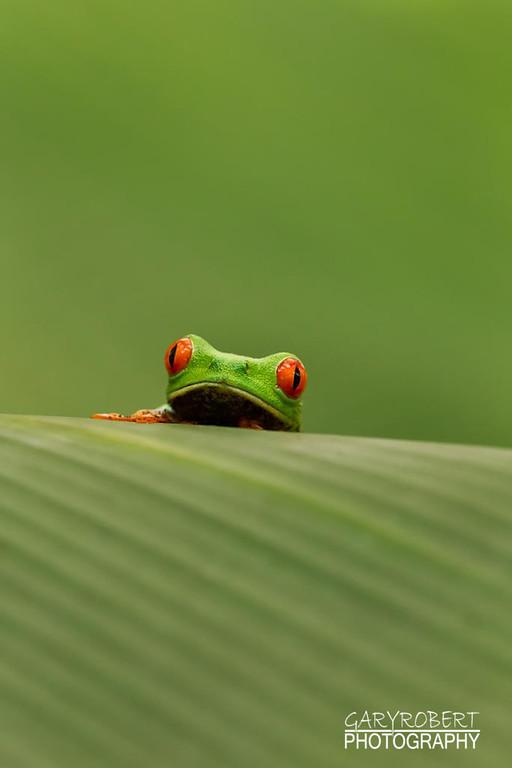 Costa Rica-9849-2
