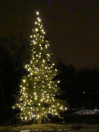Tree of Lights 2011