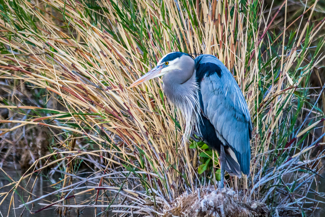 I was really surprised to see this Blue Heron in the little pond along the nature trail on the way to see the last sunset in Big Bend.