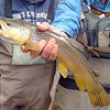 Jim's first Brown Trout