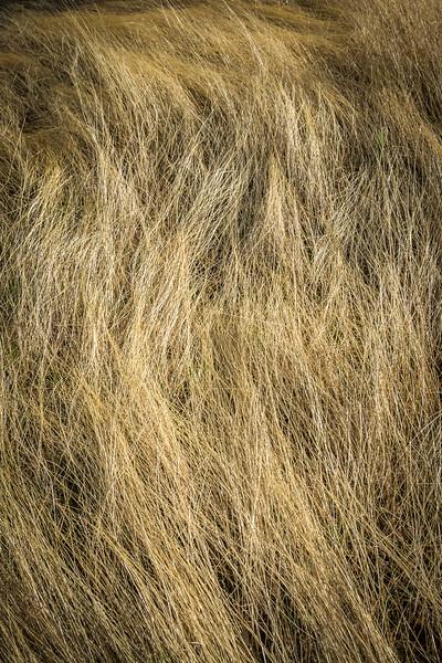Desert grass.  I love the waves created by the desert wind.