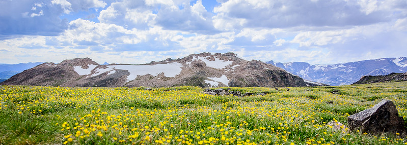 More amazing wild flowers and snow and mountains oh my!