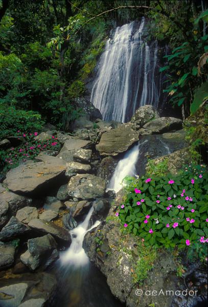 El Yunque Caribbean National Forest, Puerto Rico