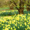 Spring at Cylburn