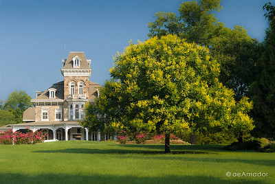 The Mansion with Golden Rain Tree in the foreground.