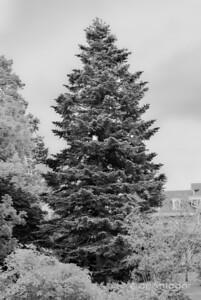 Cylburn Arboretum