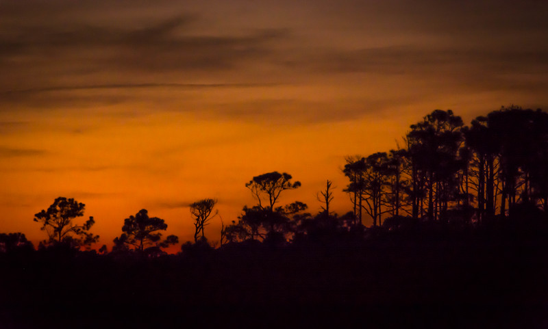 Sometimes the sunsets in FL create interesting silhouettes.