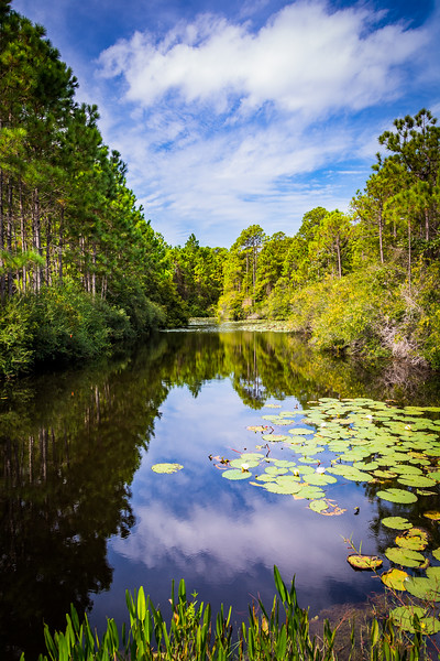 Canal in Topsail State Park - FL