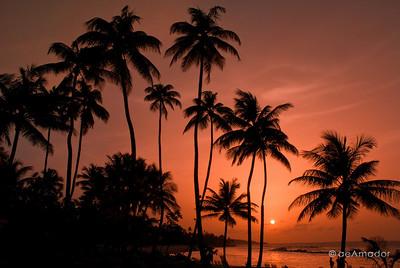 """A Caribbean Thing"" _DSC0154aeamador©-DB-C"