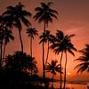 """A Caribbean Thing""<br /> _DSC0154aeamador©-DB-C"