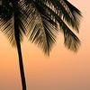 """Palm Simple""<br /> _DSC0109aeamador©-DB-C"
