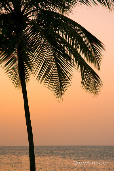 """Palm Simple""<br /> _DSC0109aeamador©-DB-C"