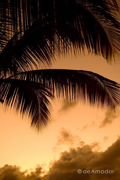 """Tropical Amber""<br /> _DSC0009aeamador©-DB-C"