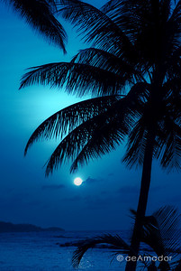 """Night Blue"" _DSC0156aeamador©-DB-C"